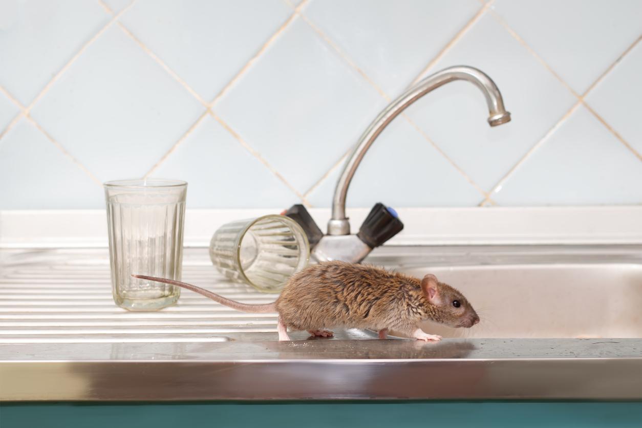 Rat control in Didcot